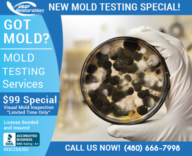 mold-inspection2